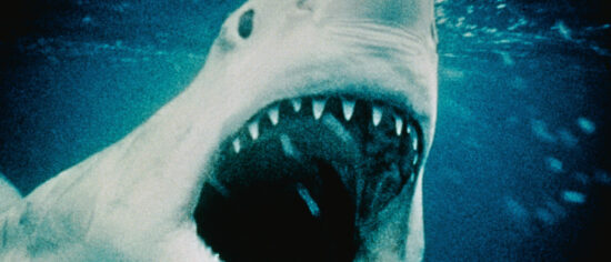The Best Shark Movies To Watch That Are Not Jaws